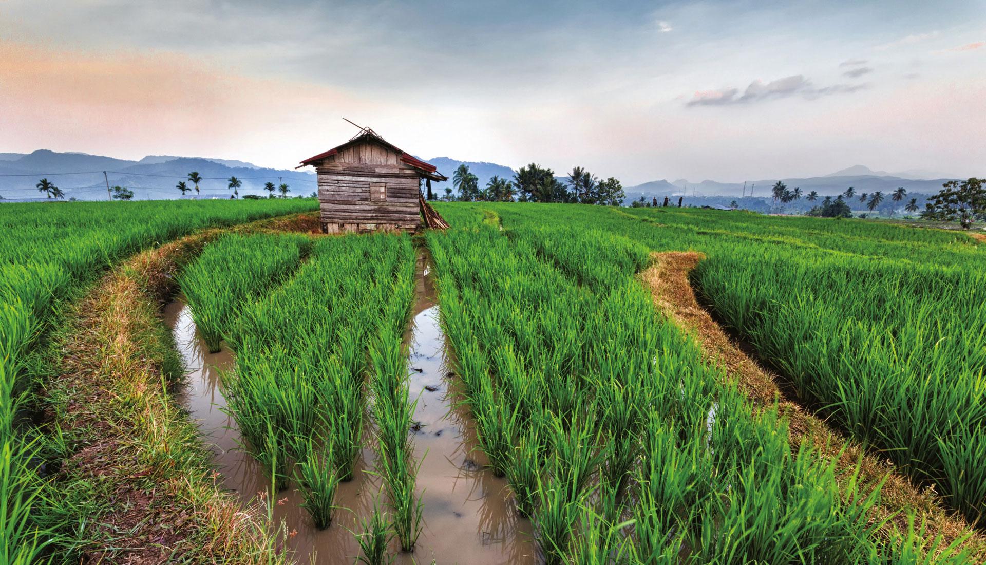 Malaisie-Bornéo - exotisme et modernité
