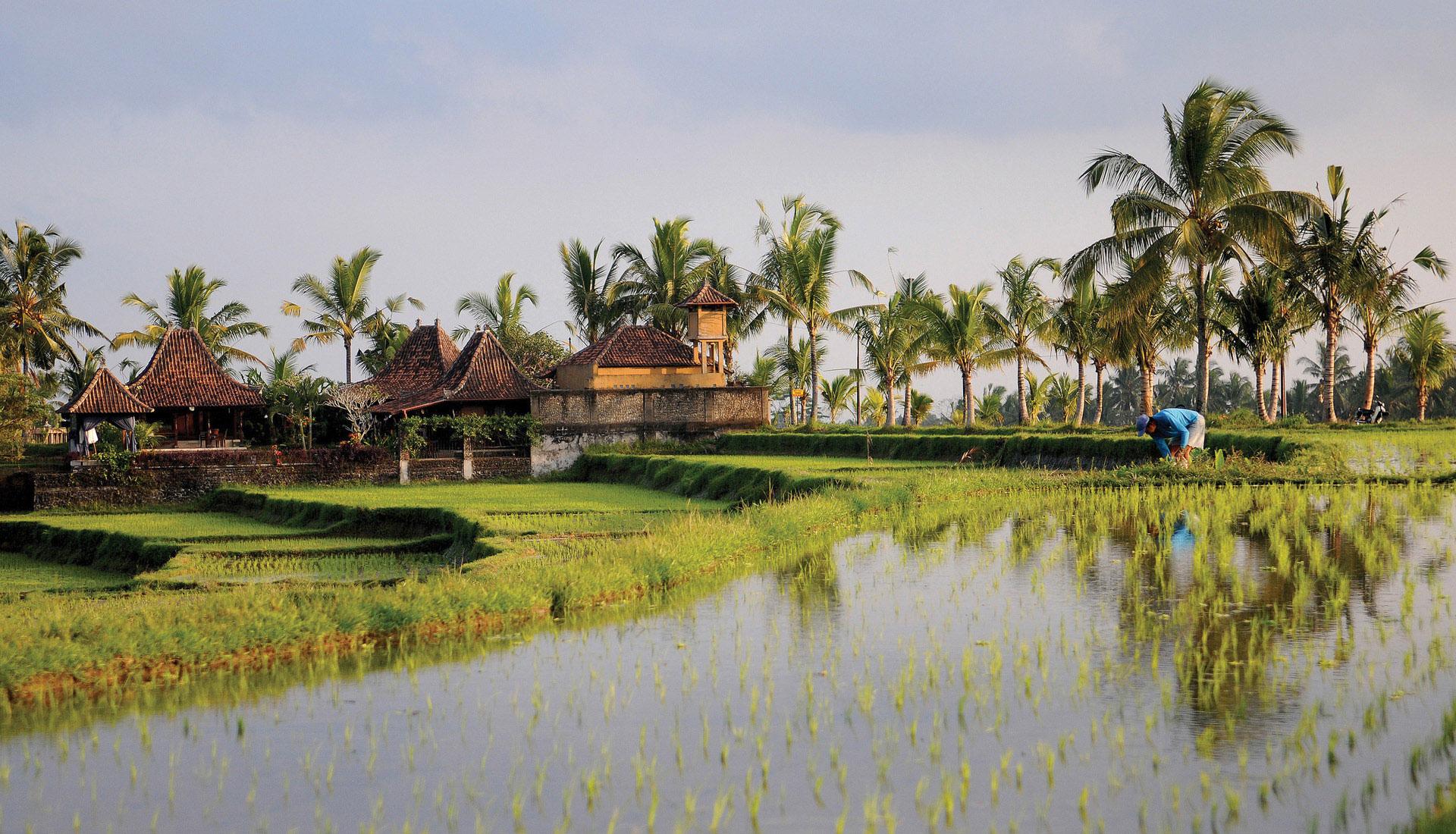 Indonésie - Bali et Pays Toraja